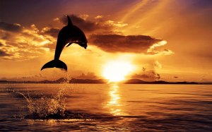 Good-Morning-Sunrise-Dolphin