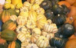 WinterSquash15